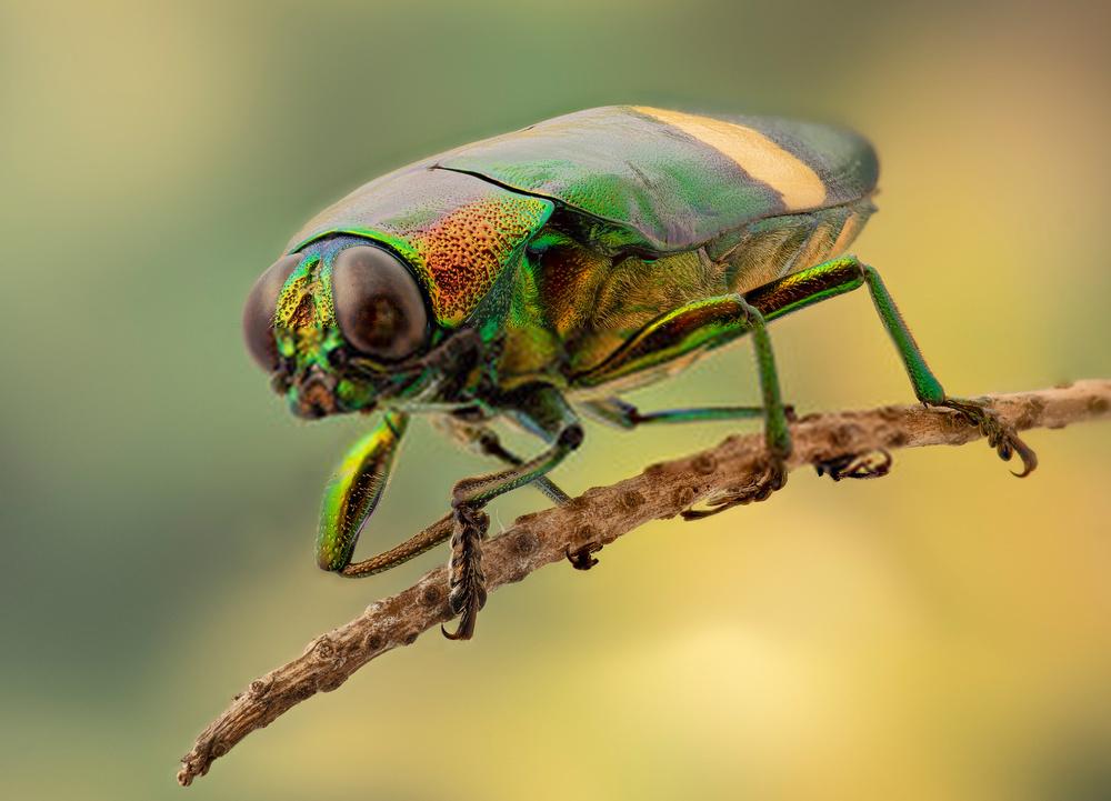 insectos verano